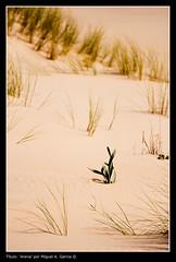 Arena (.Kikaytete.QNK) Tags: huelva arena dunas doñana mywinners kikaytete betterthangood theperfectphotographer