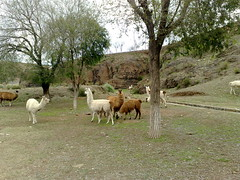 28022009119 (Mauro Gabriel) Tags: 2009 vacaciones santacatalina