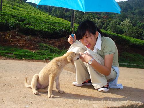 Ow Puppy