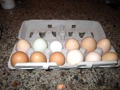 Leyden Glen eggs