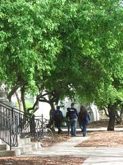 Scene at UIUC (dreamofdata) Tags: trees green students bike campus spring universityofillinois uiuc urbanachampaign