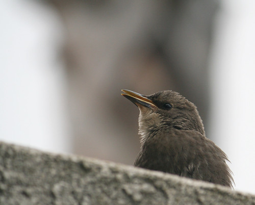 Kona Kai Resort - Sweet Bird
