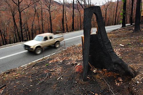 Beechworth bushfire, Victoria, Australia IMG_4908_Beechworth_Fire_2009