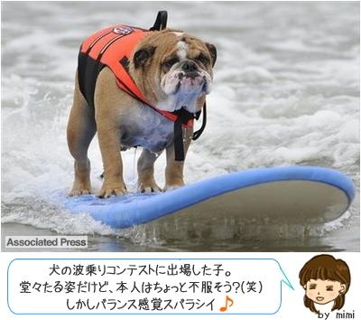 犬のサーフィン 画像