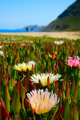Miraggi / Mirages (AndreaPucci) Tags: flowers sea people france mare mirages hill corsica persone fiori francia spiaggia collina miraggi sonnenblumen canoneos400 ilerousse theunforgettablepictures tamron1118mmf4556 andreapucci