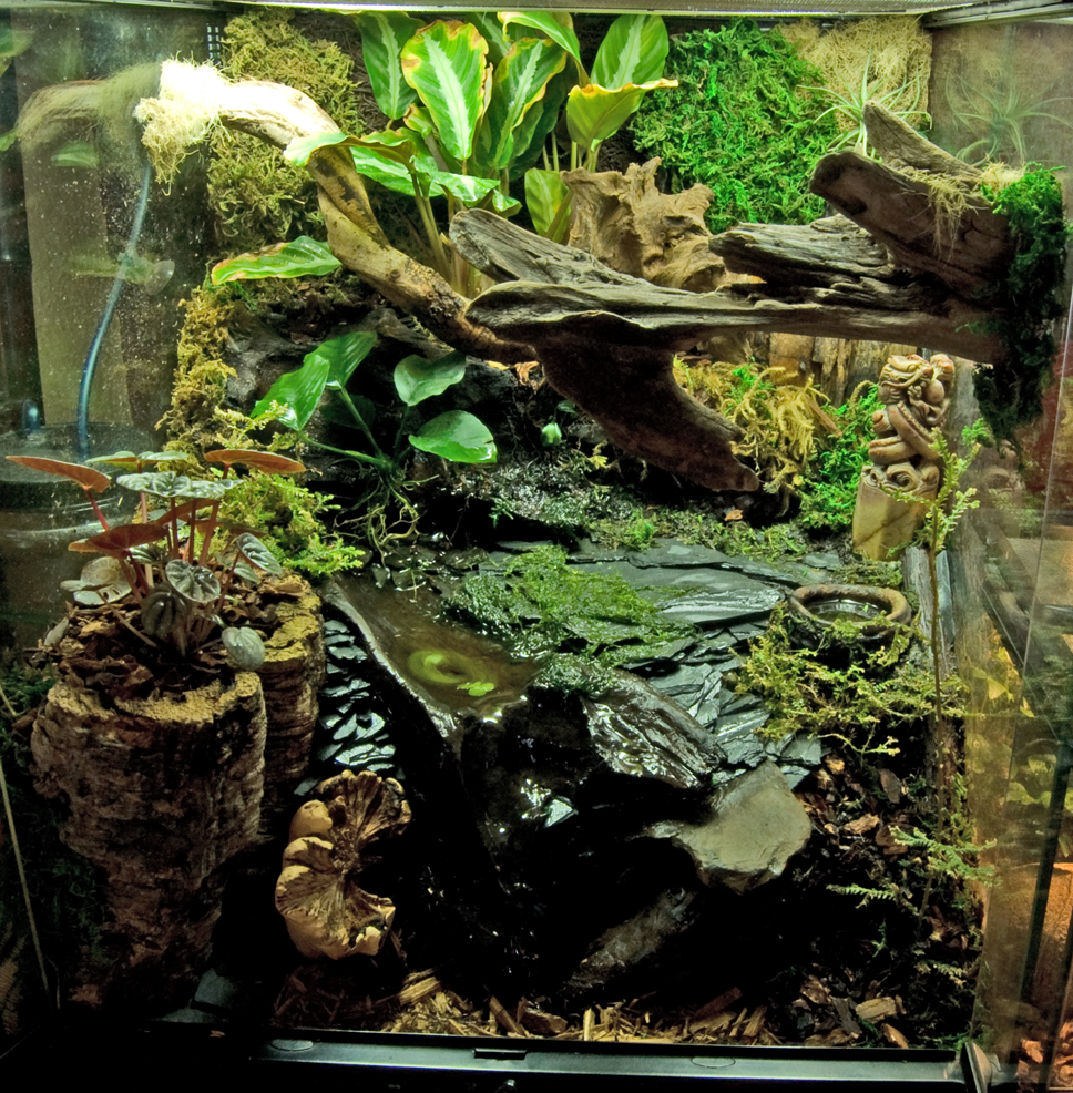 The Reptile Room on Pinterest | Crested Gecko, Reptiles ... 10 Gallon Dart Frog Vivarium