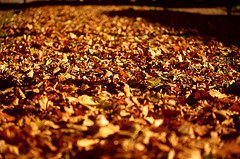 autumn (gianluca_cozzolino) Tags: world autumn panorama paris nature 35mm reflex nikon emotion dia panoramic emotions autunno nikonfm2 reportage parigi twr analogic diapo gianluca 105mm cozzolino nikonblack gianlucacozzolino nikonanalogic