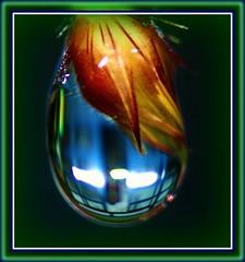 Oceanos so feitos de gotas D gua... (((New version 2009))) (mallmix ((OFF))) Tags: world flowers amigos flower macro brasil canon mix fdsflickrtoys bravo flickr searchthebest natureza vivid esperana 2008 2009 breathtaking bh lifeshot excellence simplicidade naturesfinest wonderworld ideia blueribbonwinner vibrantcolours supershot magicdonkey flickrsbest specnature masterphotos goldenmix golddragon abigfave artlibre worldbest platinumphoto cmeradeourobrasil anawesomeshot impressedbeauty aplusphoto ultimateshot specinsect irresistiblebeauty superbmasterpiece goldenphotographer wowiekazowie diamondclassphotographer flickrdiamond megashot superhearts frhwofavs ishflickr ysplix excellentphotographerawards flickrelite orvalhadas theunforgettablepictures creativephotograhers wwrusa macromix amobhradicalmente mauriciomix1yahoocombr colourartaward fiveflickrfavs wonderfulworldmix macromarvels mallmix thedropsofrain goldstaraward vanagram 100commentgroup oltusfotos mallmixstaraward