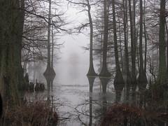 Foggy Swamp (dbro1206) Tags: trees mist reflection foggy swamp cypress arkansas