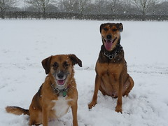 Dogs enjoying a play in the snow