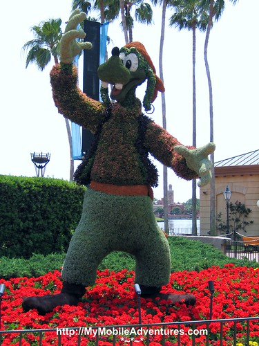 IMG_4263-Pirate-Goofy-Topiary