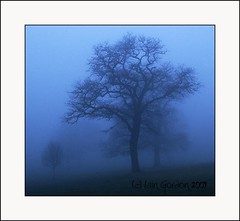 Cool Misty Trees - Camperdown Park  - Dundee - Scotland (Magdalen Green Photography) Tags: trees misty scotland moody dundee scottish tayside coolness camperdownpark dsc4348 iaingordon picturesofdundee coolmistytrees dundeephotography imagesofdundee dundeestockphotography printsofdundee