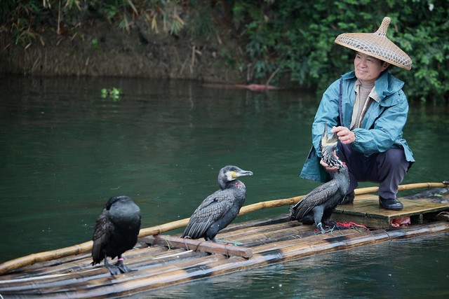Cormorant Fishing, Guilin