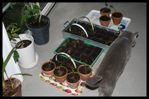 plantskolan
