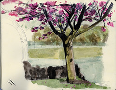 Sakura Gourock (Wil Freeborn) Tags: tree moleskine cherry journal sketchbook sakura gourock
