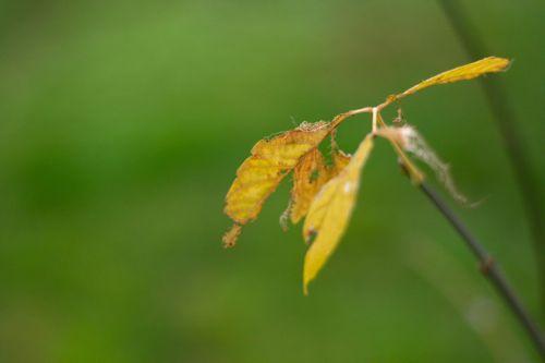 autumn's fading