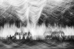 houses in the grove (nicola tramarin) Tags: longexposure italia case icm mosso veneto rovigo pioppeto lungaesposizione blackwhitephotos polesine intentionalcameramovement nicolatramarin