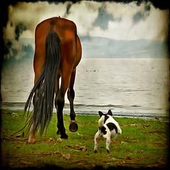 ~the grand delusion~ (uteart) Tags: horse dog jumping explore airborne myfave barking agitated utahagen ghostworks utehagen uteart texturebyghostbone explore052409