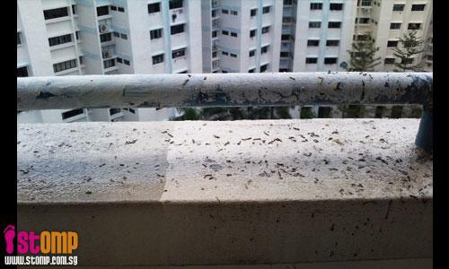 Geylang RC member feeding birds result in unhygienic bird poo all over the place