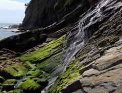 IMG_1157 (hiway99w) Tags: statepark oregon spring hiking waterfalls oregoncoast oswaldweststatepark capefalcon shortsandsbeach tillamookcounty oregoncoasttrail blumenthalfalls