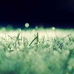 Frostbitten (Stephen.James) Tags: morning blue winter cold grass night dark early frozen frost bokeh dew