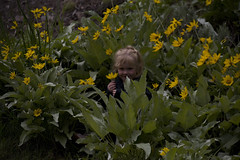 Another flower child (kquaas) Tags: summer usa lund mountains animals eric montana bozeman wildlife yellowstonenationalpark wyoming tribe patty 2009 kathi grandtetonnationalpark jobsingreatplaces coolworkscom billberg kariquaas cwmeetup mycoolworks