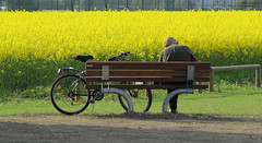 Leggere un giallo. (Luca +10) Tags: bike yellow bench giallo showroom bici superstar legacy level3 level6 panchina aclass level4 level5 colza level2 level1 coleseed flickrgoldaward flickrbronzeaward flickrsilveraward goldstaraward universalelite superstarthebest smilingriverrat 2412510