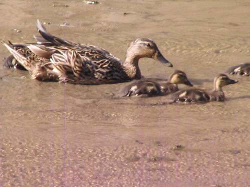 Out for a Swim with Mom