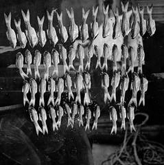 Drying fish, Khlong Yai, Thailand. (ndnbrunei) Tags: travel blackandwhite bw 120 6x6 tlr film rollei mediumformat square southeastasia kodak bn mf kodakbw400cn xenar rolleicord bw400cn 500x500 classicblackwhite analoguephotography rolleigallery ndnbrunei khlongyai 50yearoldcamera ilovemyrolleicord