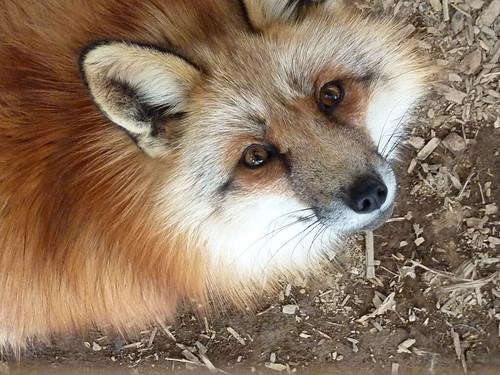fox05