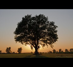 More than 14000 Views.. . thank you!!! (oliver's | photography) Tags: trees friends sunset tree nature silhouette photoshop canon germany eos flickr raw image  adobe frame outline dslr copyrighted supers