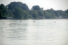 IMG_3553 (UmmAbdrahmaan @AllahuYasser!) Tags: water river kayak canoe malaysia terengganu 991 kualaterengganu manir ummabdrahmaan