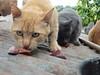 yutdudfufyuygi (Jéssica_Jar.) Tags: cat gatos carne cheirando comendo