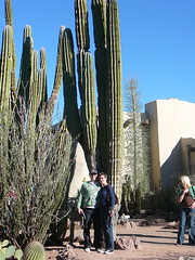 These are Tall, and Make People Look Short (alist) Tags: phoenix garden botanical desert alicerobison