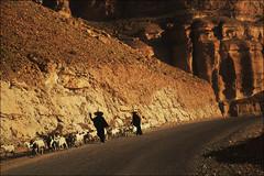 Wadi Doan, Hadramut,Yemen (red_ink) Tags: yemen wadi hadramaut dawan