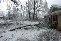 Front yard after (laurienrick) Tags: ice nature icestorm damage arkansas naturaldisaster springdale january2009 icestorm2009