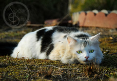 The hunter (KaTrina Blanks) Tags: portrait pet cats cute animal animals cat nc furry kitten chat mud fuzzy kitty northcarolina kittens dirty gato cuddly furryfriday gatto ritratto gatti animale kedi portre chaton petportrait gattino poils petphotography hayvan carino irin gattini sevimli peloso kediler animaledomestico bulank pisipisi yavrukedi affettuoso evcilhayvan tyl camoments venerdpeloso momentidigatto ritrattodacompagnia tylcuma kedianlar hayvanportre
