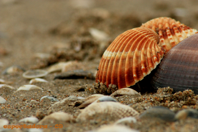 Tras la marea... el desorden