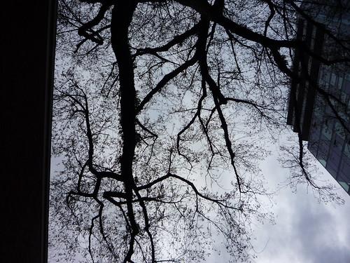 museum tree