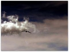 ~ le ali della libert  ~  the wings of freedom ~ (Ev@ ;-)) Tags: blue sky white clouds freedom seagull flight explore flyby thewingsoffreedom lealidellaliberta iwouldwanttoflyfreeandlightbutsomeonepreventsmefromitcontinuallyragingonmywingswhydidyoudo
