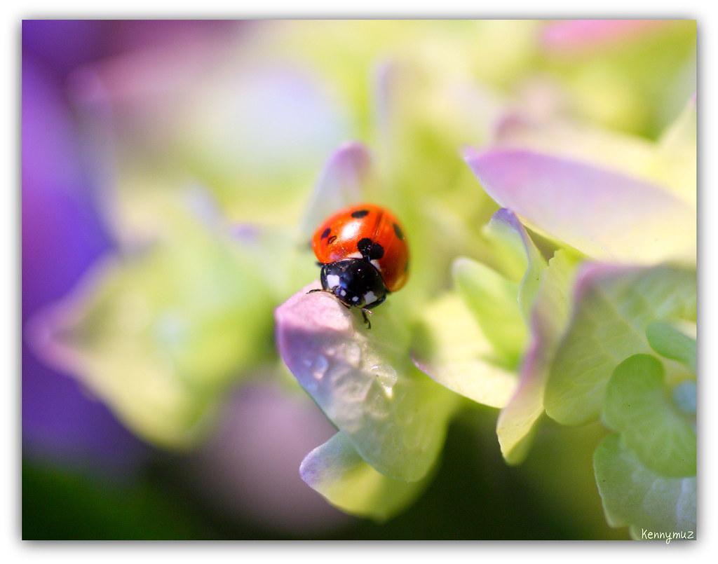 luv bug