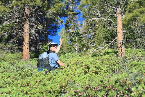 Manzanita Madness Olancha Peak 5 10 09 High Sierra Topix