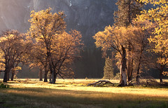 sun rising in yosemite valley (Molly Wassenaar) Tags: california trees sunrise meadow yosemite