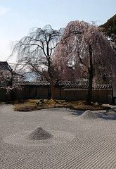 Hashin-tei: Sakura (jpellgen (@1179_jp)) Tags: japan temple japanese spring nikon kyoto asia buddha buddhist buddhism zen 京都 日本 nippon 1855mm nikkor kansai 2009 nihon kodaiji kinki higashiyama honshu 高台寺 rinzai d40 東山区
