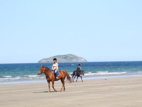 sea horses 8