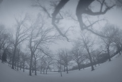 Step out the front door like a ghost into the fog where no one notices the contrast of white on white (thorvaala) Tags: naturesfinest vftw theperfectphotographer paololivornosfriends artistictreasurechest amazingeyecatcher