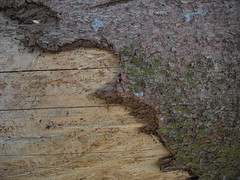 CIMG2030 (retro rebel design) Tags: wood tree texture creative commons textures holz texturen textur