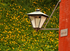 Red Green Yellow (avirus) Tags: red flower green lamp yellow copenhagen denmark europe bokeh kastellet