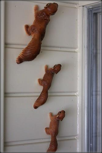 squirrels1