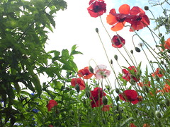 Open Garden Day Beemster 2009